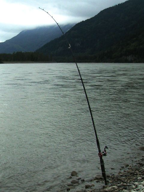 ... bar fishing chinook salmon on BC's Fraser river