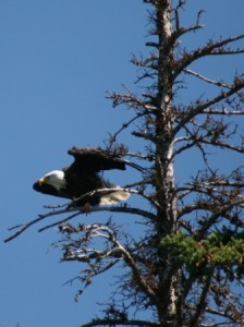 Tunkwa Lake Park BC Fishing Vacation - the Eagle has Landed