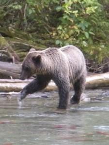 ... da bears!
