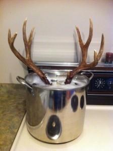 DIY European Deer Skull Mount - deer head stew!