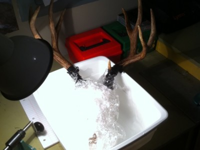 DIY European Deer Skull Mount