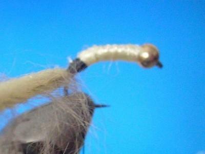 Sharks Caddsi Larva Fly