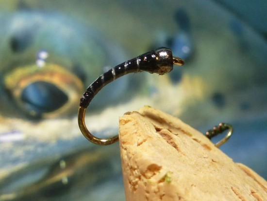 ... the Zebra chironomid fly pattern!