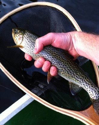 Fly Fishing Cutthroat Trout - Cutty