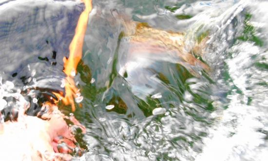 Fall Fishing Report - Rainbow Release