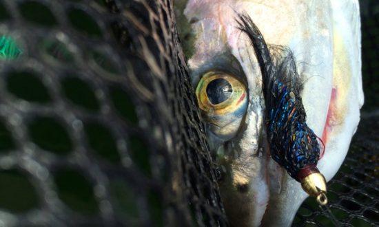 Friday Fall Fishing Report - Rainbow Trout Black Leech